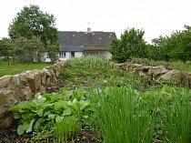 zeleninovy-zahon.jpg